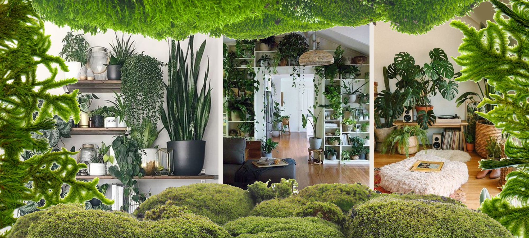 House Plants and Interior Design