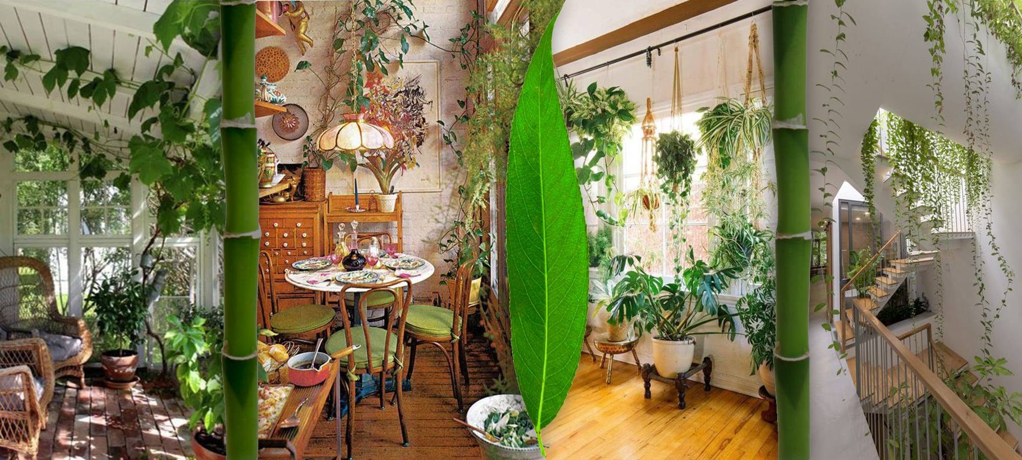House Plants in Interior Design